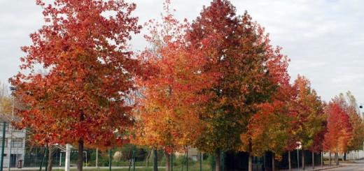 Autumnis Vermudi