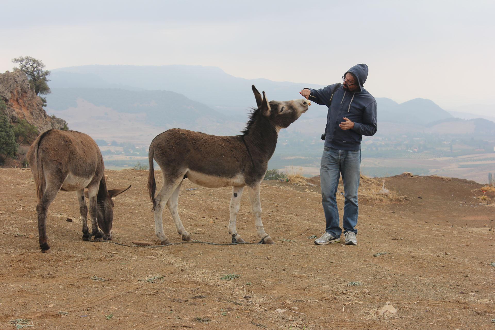 burro azrou1